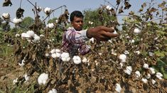 'Greed has to end': India urges Monsanto to accept GM-cotton royalty cuts or leave market http://news.organicfoodmaps.com/R5 More news @ http://organicfoodreport.com  #news #organic #gmo