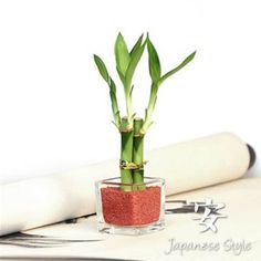 Small Lucky Bamboo Favor, Bamboo Party Favors, Japanese Party Favors