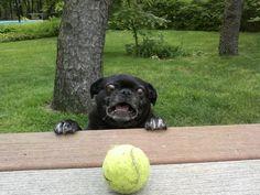 Derpdog Vs Tennis Ball - Imgur
