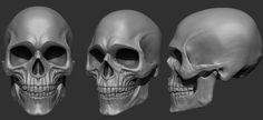 skull Skull Model, Head Anatomy, Zbrush Tutorial, Modelos 3d, Human Skull, Anatomy Reference, Skull And Bones, Character Design, 3d Character