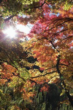 Arima,Japan.