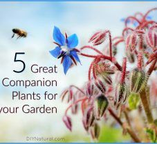 Companion Planting: 5 Great Plants for Your Garden