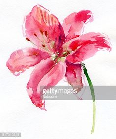 watercolor-lily-illustration-id517310345 (378×453)