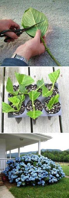 10 ideas brillantes plantas propagar para arraigar y | Postris