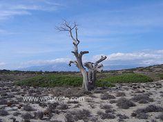 Chrissi -  Ierapetra #Crete Island , Greece