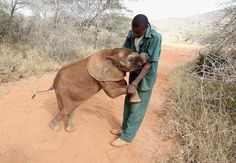 72 Incredible Elephant Facts That Will Make You Want To Save Them