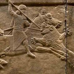 Museopics pictures gallery & history of British Museum Nineveh Lion Hunt Assyrian Antiquities