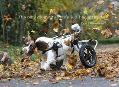 The only disability in life is a bad attitude. ~ Scott Hamilton