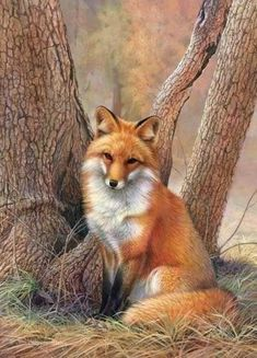"""llbwwb: """" Todays Cuteness:) fox by Bellam. """" The beautiful painting of the fox you posted is by Joni Johnson Godsy. I don't know who this clown Bellam is but he. Animals And Pets, Baby Animals, Cute Animals, Funny Animals, Strange Animals, Beautiful Creatures, Animals Beautiful, Hello Beautiful, Fuchs Baby"""