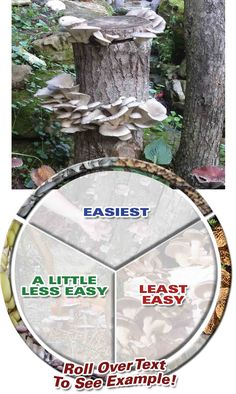 Types of mushrooms to grow, by Level of Difficulty - Field And Forest Products