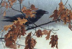Shaun Gould  Winter raven