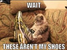 Fat Cat Meme #Shoes, #Wait
