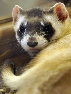 ;) What I love about ferret http://www.pinterest.com/pin/532832199634328859/