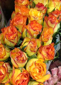 Yellow and Peach tipped #Roses at #Louisville Costco - 16.99 for TWO dozen. So gorgeous you can practically smell them from the picture.