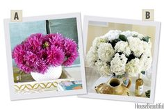 Would You Rather: Chrysanthemums or Hydrangeas?