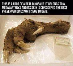 Dinosaur leg found with tissue intact