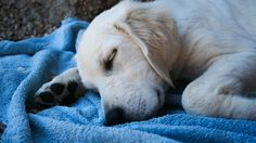 If your dog passes away at home, you have 3 options: vet, crematorium, burial. Here's what you need to know about cremating or burying a dog.