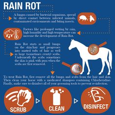 Rain Rot Infographic from Fly On Over | http://flyonovereq.com