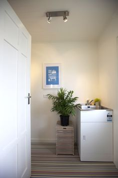 Home Staging by Places & Graces. Laundry. Blue and white. Dark floorboards. Walls, Cararra, Resene. 'Milk & Money' art print by 326, endemicworld.com. Indoor plants. Striped lino.