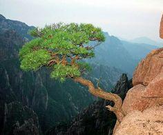 Foto de www.bonsai4me.com
