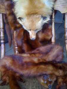 Fox and Mink Wraps - $100 (West Boylston)