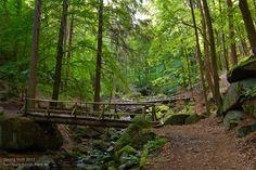 Diesen Anblick hat schon Heinrich Heine bewundert - auf dem nach ihm benannten Wanderweg durchs Ilsetal.