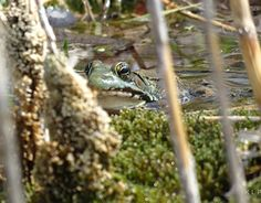 """Check out new work on my @Behance portfolio: """"Just another frog in a bog"""" http://be.net/gallery/36623893/Just-another-frog-in-a-bog"""