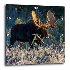 3dRose dpp_54974_1 Bull Moose in Early Morning Light and Frost in Riding Mountain National Park, Manitoba, Canada Wall Clock, 10 by 10-Inch 3dRose http://www.amazon.com/dp/B008EWUCRC/ref=cm_sw_r_pi_dp_coc4wb1VYZAVJ