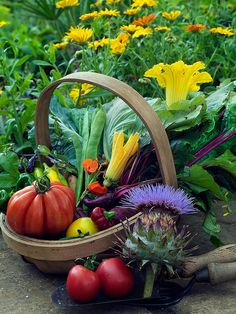 Heritage vegetables | by Countryside Online