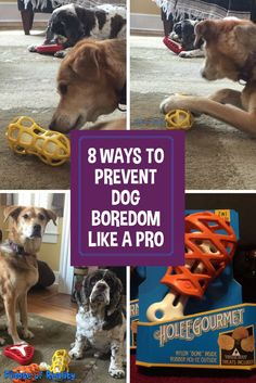 8 Ways to Prevent Dog Boredom Like a Pro Activities for dogs to keep a dog happy and not bored. There are many ways to prevent dog boredom and here are 8 of them. Number 3 is our favorite! Brain Games For Dogs, Dog Games, Toys For Bored Dogs, Dog Boredom, Boredom Busters, Dog Enrichment, Dog Puzzles, Diy Puzzle Toys For Dogs, Dog Information