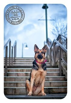 Julie Clegg photographs a dog in the Issaquah Highlands area. She started a project this year called Dog-A-Day for Canine Cancer. Julie is an award winning photographer and was recently voted the Best of Western Washington.