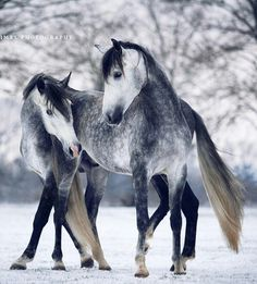 Beautiful Horses enjoying the winter day