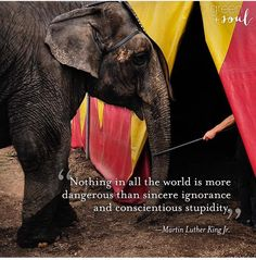 Amen.  @greenwithsoul King Jr, Martin Luther King, Cruelty Free, Amen, Elephant, King Martin Luther, Elephants, Artist