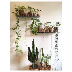 P l a n t s h e l f i e 📷🌿🌱🌵  .  .  Profitez bien de votre week-end!  ☀️👩🏼🌾🌿  .  .  #plantshelfie #plants #plantlover #plantlove #plantlife #plantgang #plantparenthood #plantpower #plantaddiction #plantpower #plantgang #plantstyling #indoorplants #urbanjungle #urbanjunglebloggers #houseplants #houseplantclub #mavieenvert #botanical #vegetal #green #greenery #greenlife #pothos #pileapeperomioides #chinesemoneyplant #pilea #ceropegia #ceropegiawoodii #begonia #alocasiaamazonica…