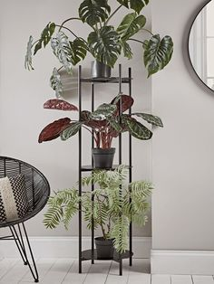 10 of the Best Tiered Indoor Plant Stands