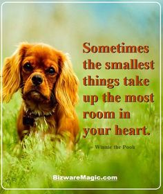 Sometimes the smallest things take up the most room in your heart. ~ Winnie the Pooh. For more inspirational quotes click this pin. Please Re-Pin. #quotes #inspirationalquotes #successquotes #quotestoliveby #quotablequotes