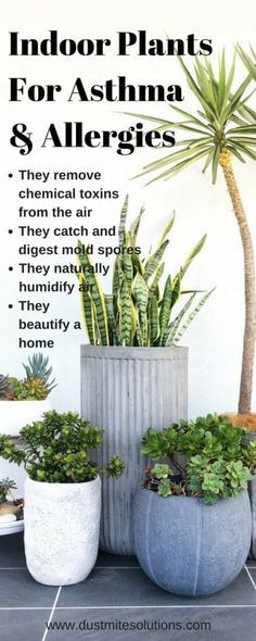 best indoor plants against asthma allergies and air pollution – House Plants House Plants Decor, Patio Plants, Garden Plants, Outdoor Plants, Flowering Plants, Garden Shrubs, Landscaping Plants, Shade Garden, Potted Plants
