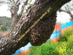 προϊόντα μέλισσας  ΠΑΡΆΓΟΥΜΕ ΑΓΝΌ ΕΞΑΙΡΕΤΙΚΉΣ ΠΟΙΌΤΗΤΑΣ ΜΈΛΙ 100% ΦΥΣΙΚΌ Bee Keeping, Honey, Plants, Health, Food, Meal, Health Care, Essen, Planters