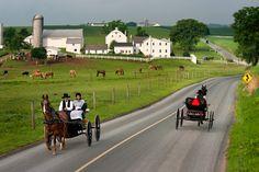 amish farm scenes  (Donald Reese Photography)