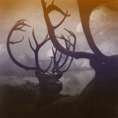 dark lomo deer