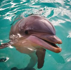 Dolphins are extremely smart. I really like interacting with them and observing them in the wild.