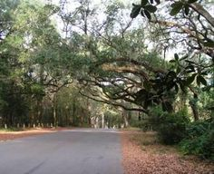 An old canopy road in Talahassee - where the Live Oaks connect overhead. This is in Tallahasee. See our article: What Is the Best Florida Region for Your Retirement Topretirement