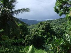 Foto de Ceiba, Puerto Rico: El Ceiba, the oldest tree in PR, dating ...