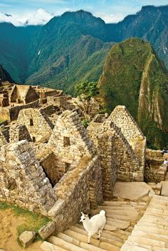 Machu Picchu - Peru...I found a secret place with a puma print early in the morning.