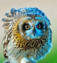 :::: PINTEREST.COM christiancross ::::  Owl Bird