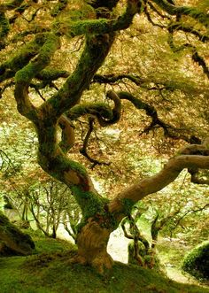Trees - Steampunk Cat - Веб-альбомы Picasa