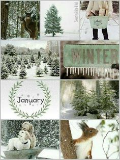 Winter mood board - green and white Collages, Tableaux D'inspiration, Hello January, I Love Winter, Winter Green, Color Collage, Beautiful Collage, Photo Images, Winter's Tale