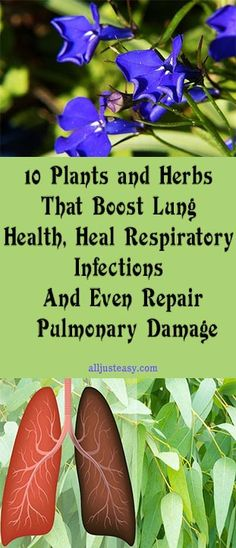 10 Plants and Herbs That Boost Lung Health, Heal Respiratory Infections And Even Repair Pulmonary Damage #fitness #beauty #hair #workout #health #diy #skin #Pore #skincare #skintags #skintagremover #facemask #DIY #workout #womenproblems #haircare #teethcare #homerecipe
