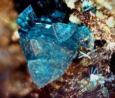Spangolite, Cu6Al(SO4)(OH)12Cl•3(H2O), Madonna di Fucinaia, Campiglia Marittima, Livorno, Tuscany, Italy. Triangular prismatic blue crystals. Fov 1.8 mm. Collection: Lithothek Munich Micromounter. Copyright: Manfred Früchtl