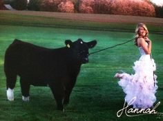 show steer graduation - Google Search